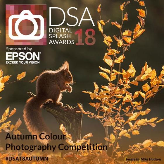 Digital Splash Awards Autumn Colour