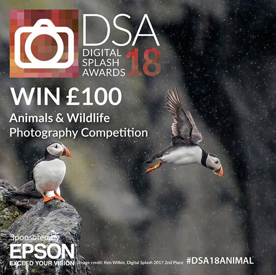 Digital Splash Awards Competition