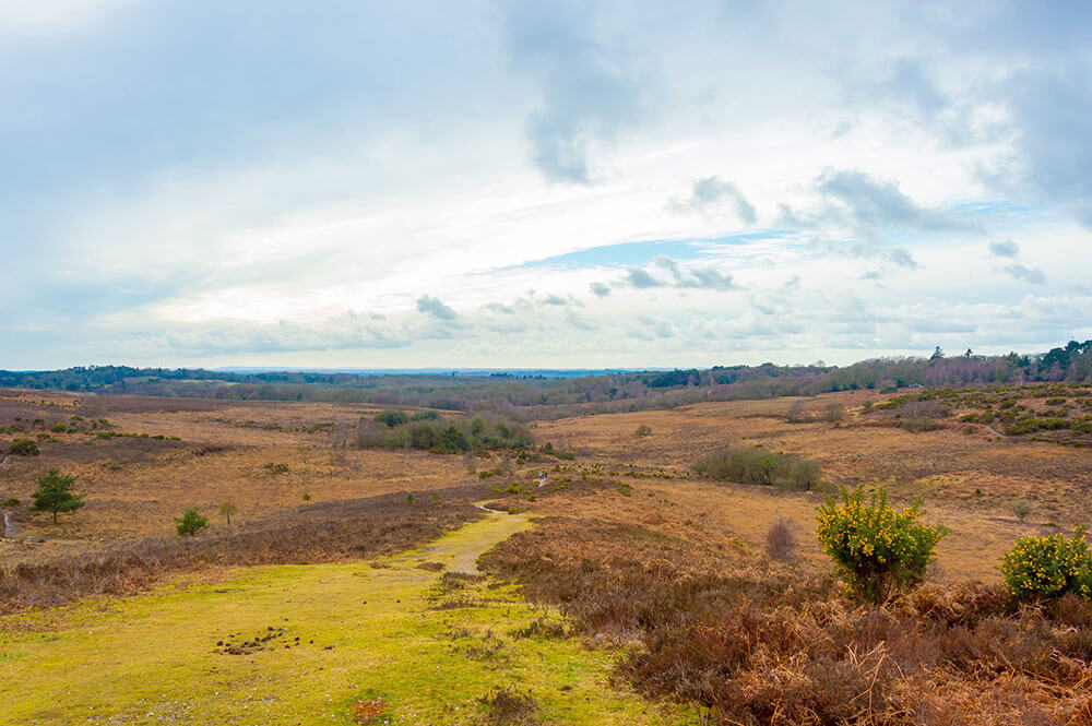 The New Forest National Park, Hampshire. Top 12 Autumnal Landscape Locations
