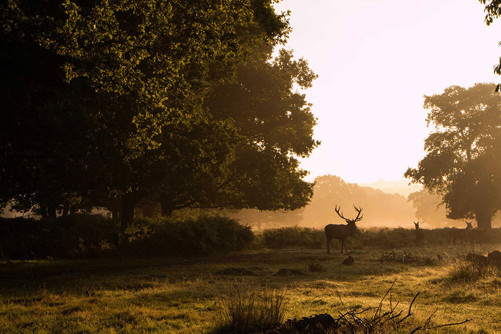 Richmond Park, London. Top 12 Autumnal Landscape Locations