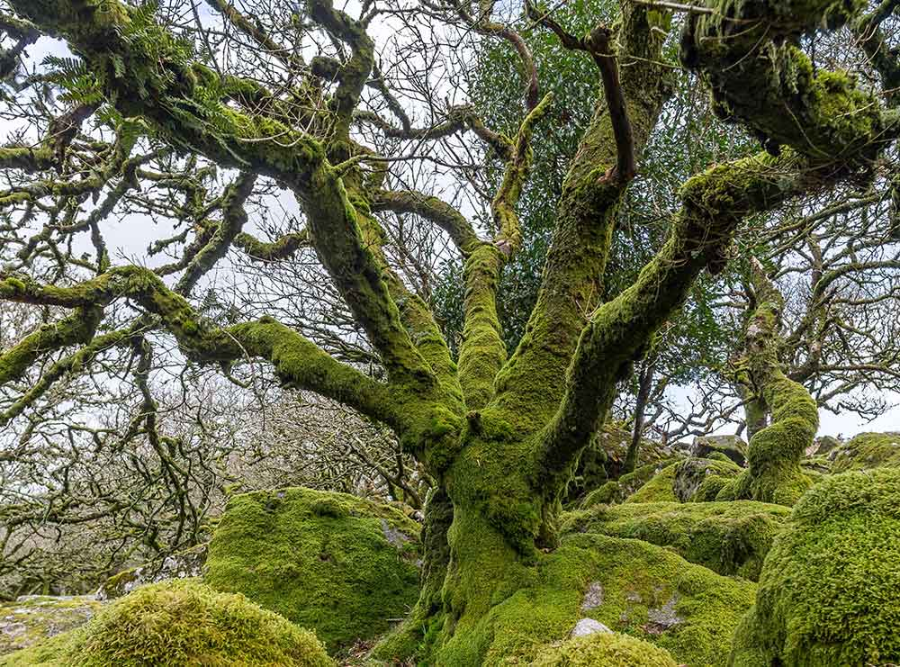 Wistman's Wood, Dartmoor National Park, Dartmoor. Top 12 Autumnal Landscape Locations