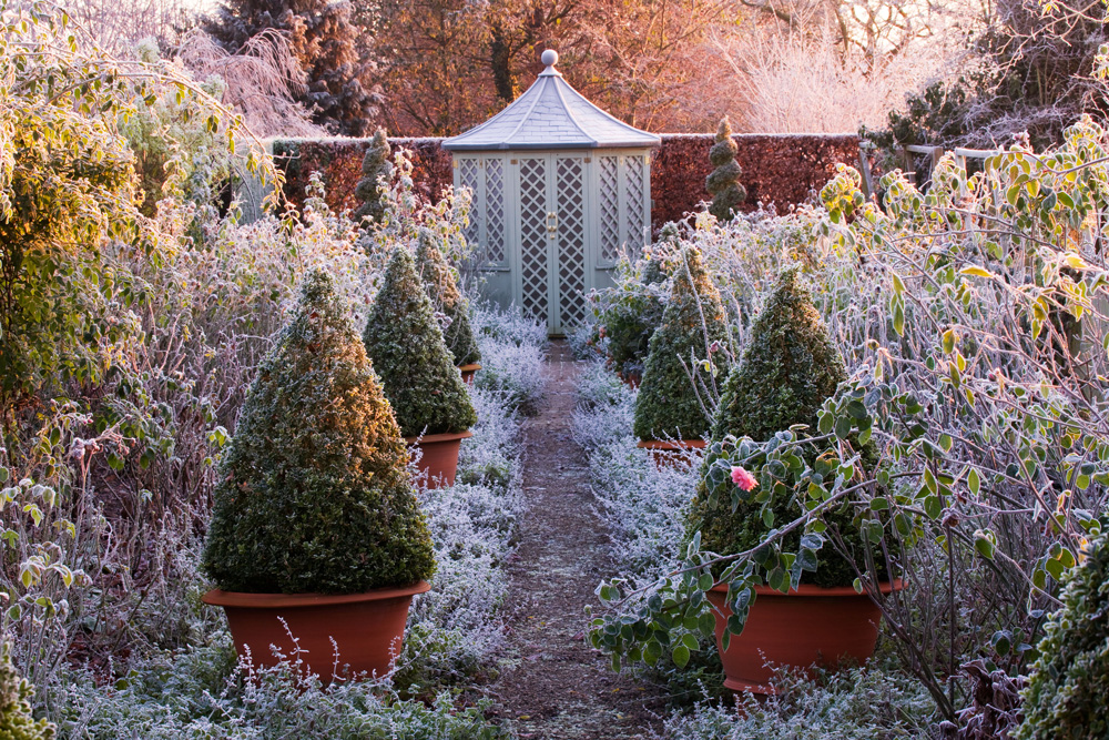 frosty garden, potted trees and shrubs