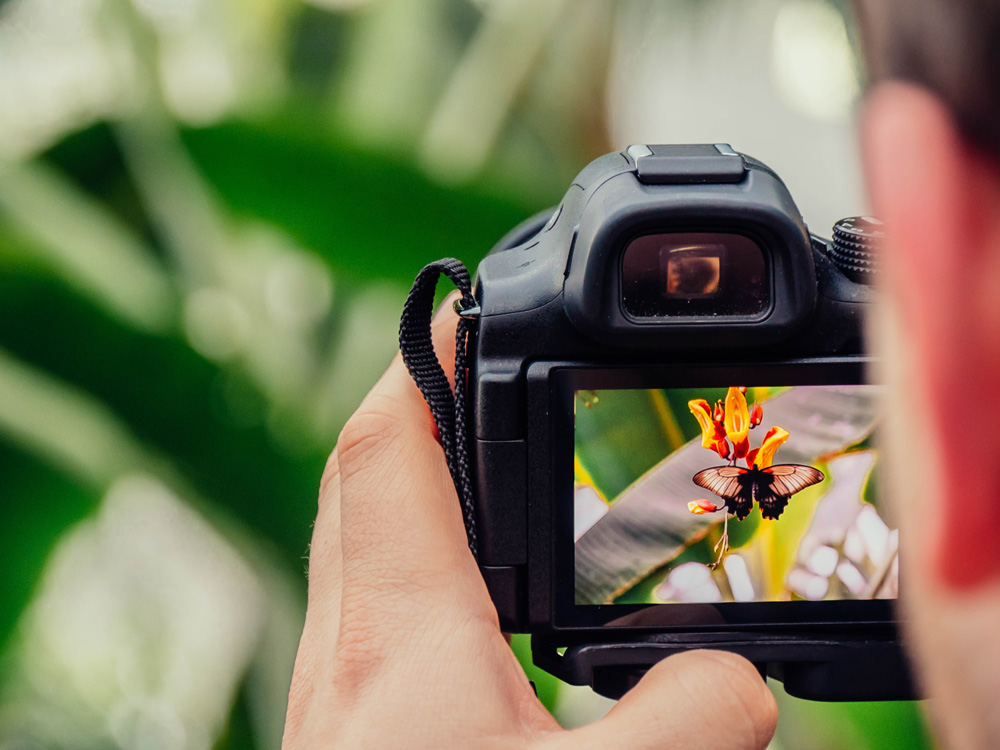 camera taking photo of butterfly