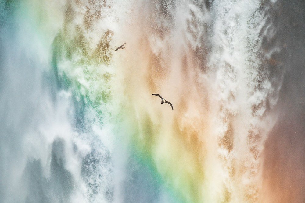 birds flying through rainbow