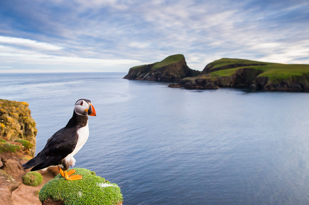 Puffin on edge of cliff with sea backdrop