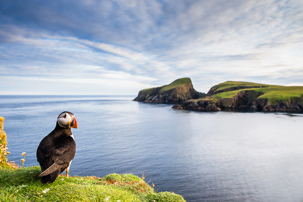 Puffin on the edge of the cliff