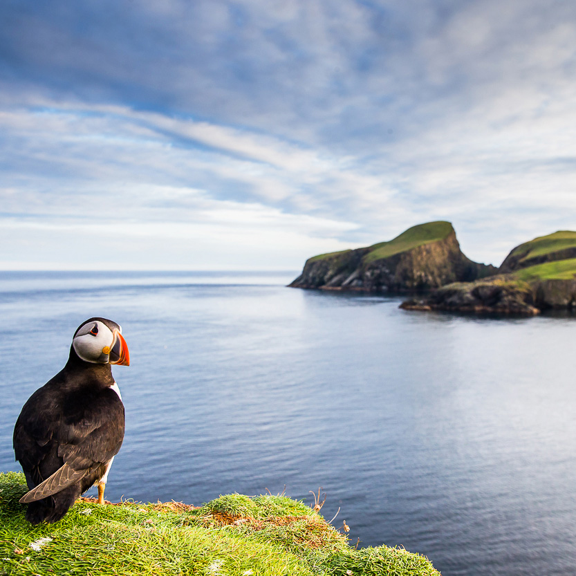 Life On The Edge: Puffin on edge of cliff with sea and cliffs background
