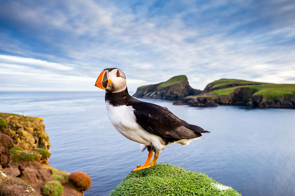 Puffin central in image with sea background