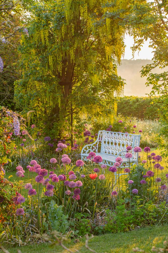 white bench under leafy tree, with bright pink flowers in front of the bench
